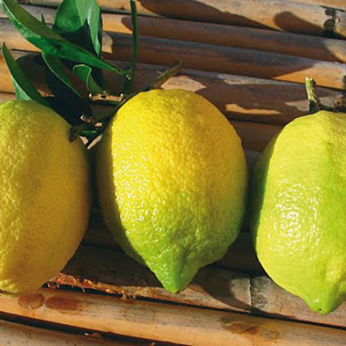 limoni Sorrento i.g.p.